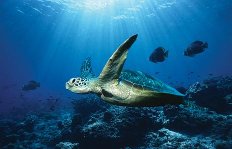 http://cowanglobal.files.wordpress.com/2011/09/ocean-turtle.jpg
